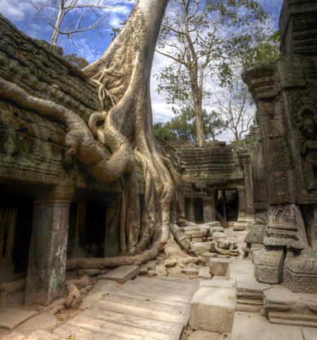 Едно от най-известните дървета на планетата ни, взело участие в снимките на филм с Анджелина Джоли. Снимка: mariusz kluzniak via Foter.com / CC BY-NC-ND