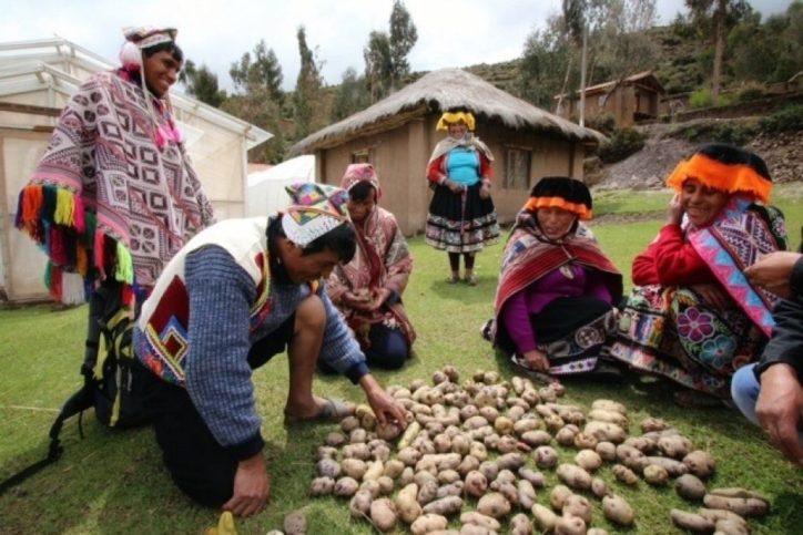Перу картофи