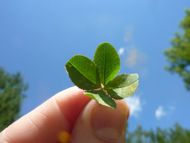 Four-Leaf-Clover