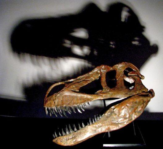 Torvosaurus gurneyi.