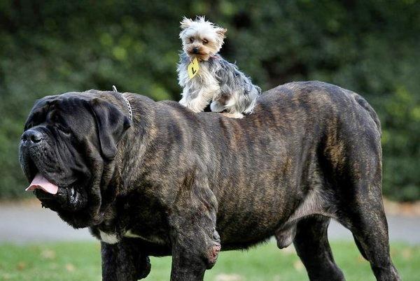 животни яздят животни