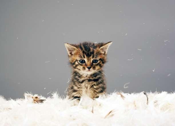 Домашната котка е сред верните приятели на хората