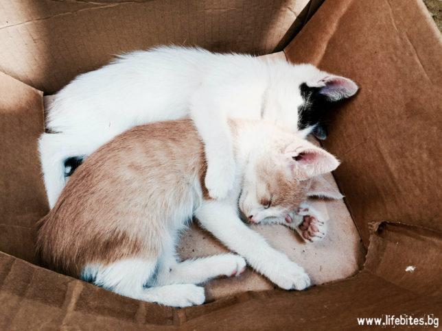 Спящи котенца