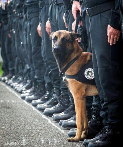 Дизел куче полицай