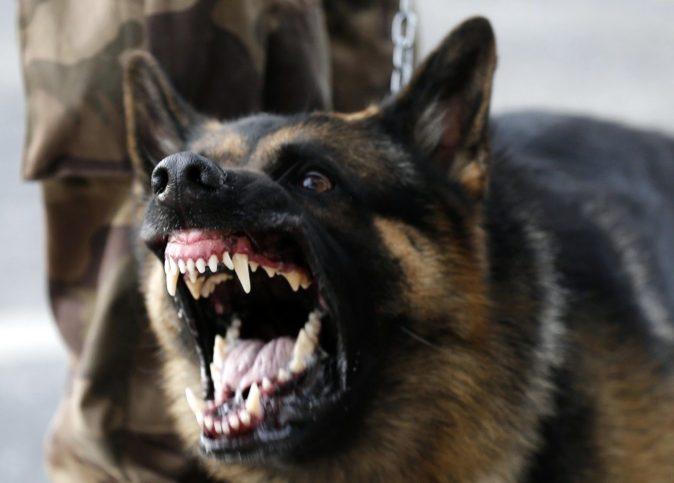 куче полицай