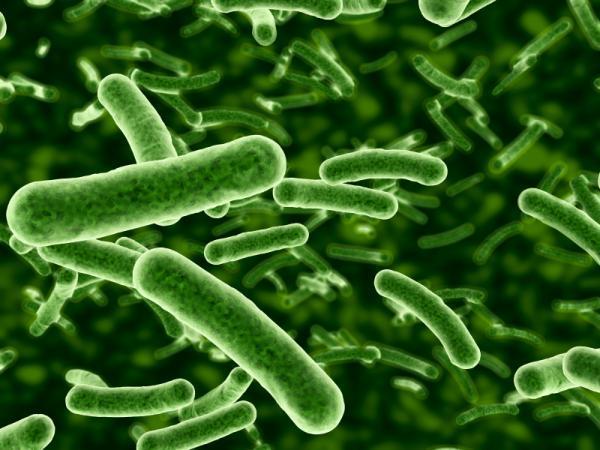 бактерията
