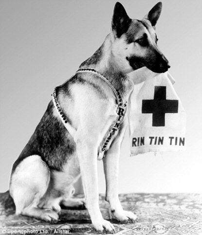 Рин Тин Тин