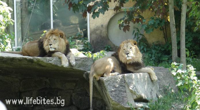 в зоопарка