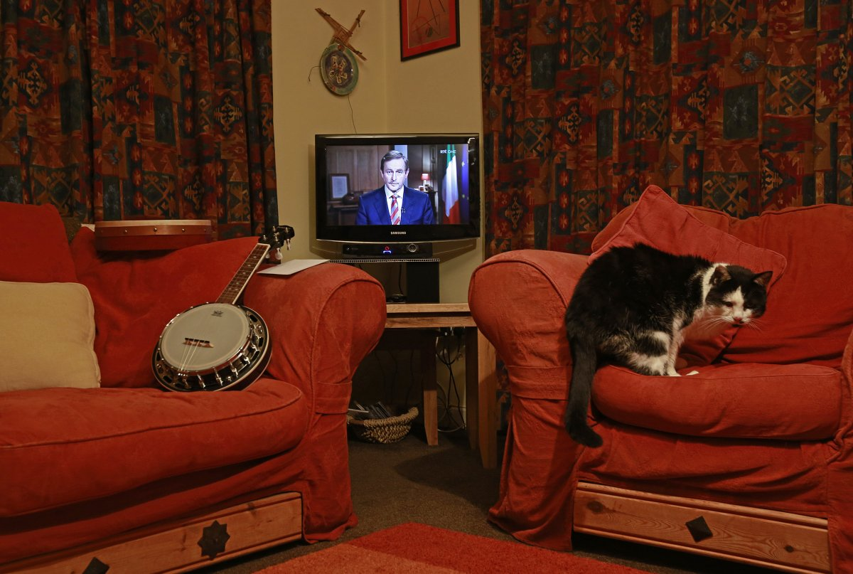 in-donegal-ireland-a-cat-turns-his-back-on-the-tv-while-the-irish-prime-minister-edna-kenny-gives-a-televised-address