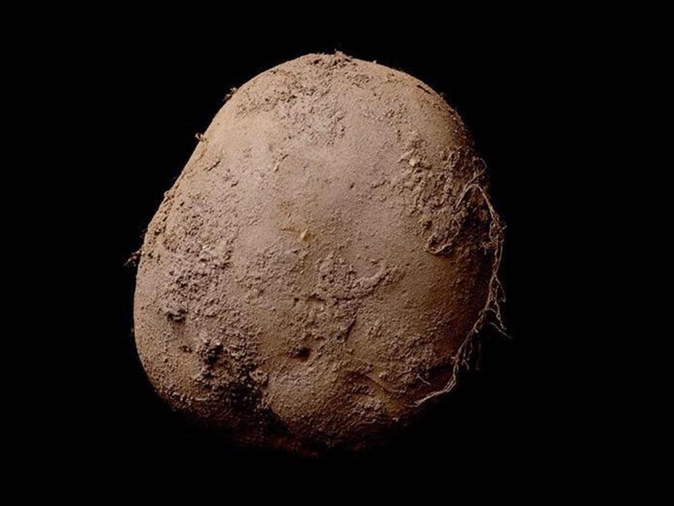 Potato #345