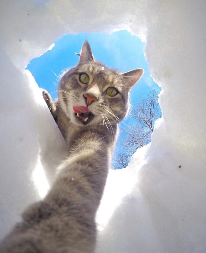 котката Мани - селфита