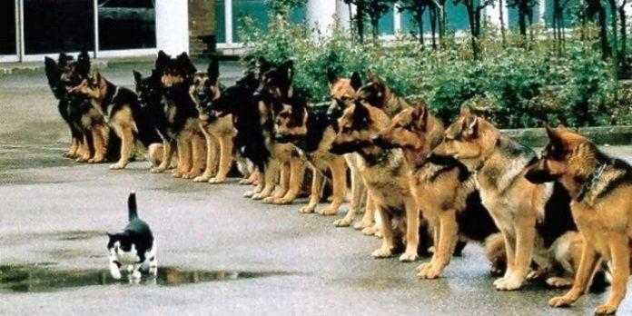 кучета полицаи