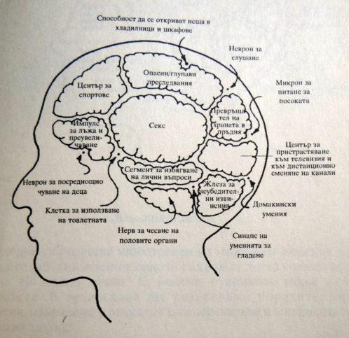 мъжкият мозък