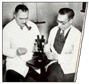 Световноизвестния американски паяк. Биолози от Университета на Акрън, Охайо изследват паяка с микроскоп.