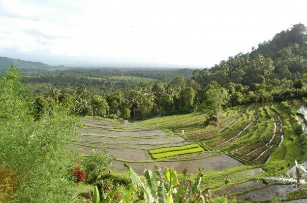 Оризови тераси Бали
