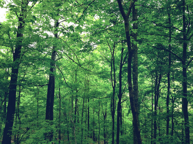 гривната спасява горите