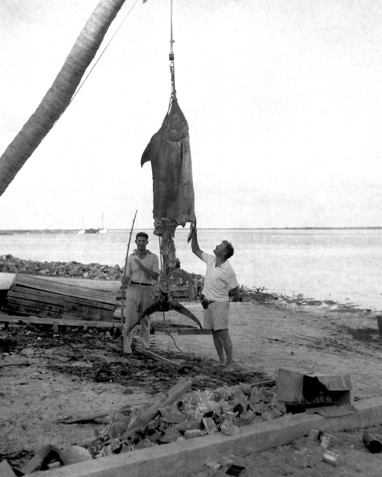 "EH 8264P Henry ""Mike"" Strater and Ernest Hemingway with ""apple-cored"" marlin. Bimini, Cat Cay, 1935. Photograph in the Ernest Hemingway Photograph Collection, John F. Kennedy Presidential Library and Museum, Boston."