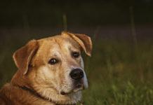 за кучетата