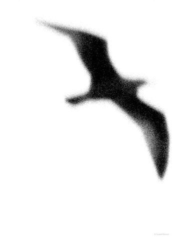 чайка - Джон Ливингстън