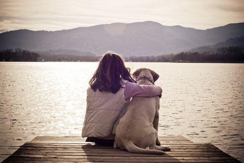 Среща с куче