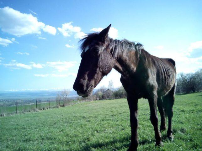 кобилата Пени