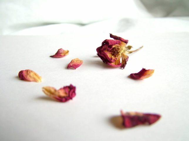 изсъхнали рози