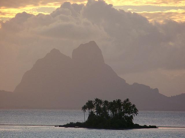 Полинезия - палми
