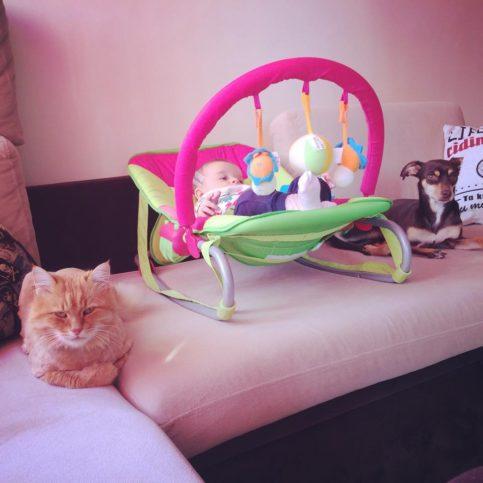 бебе, котка и куче