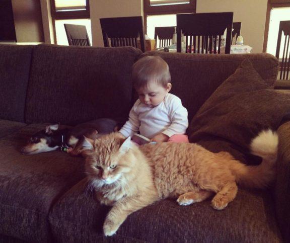 бебе и котка