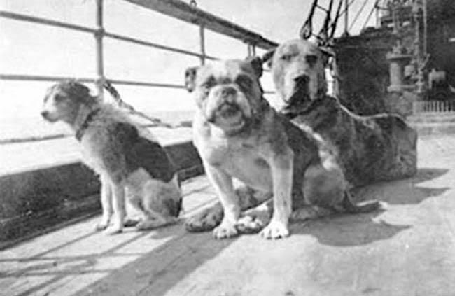 кучета - Титаник