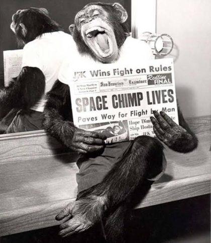 шимпанзе Хам