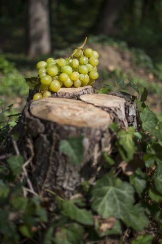 плодове - грозде