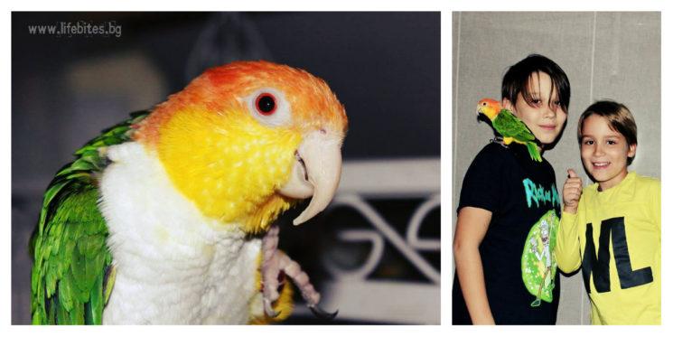 папагал - деца
