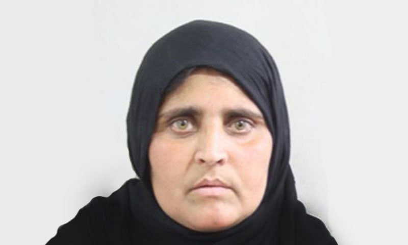 афганистанско момиче Шарбат Гула