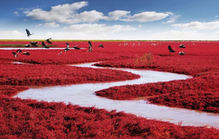 """Червеният цвят на """"плажа"""" се дължи на спрециален вид трева, който вирее там."""