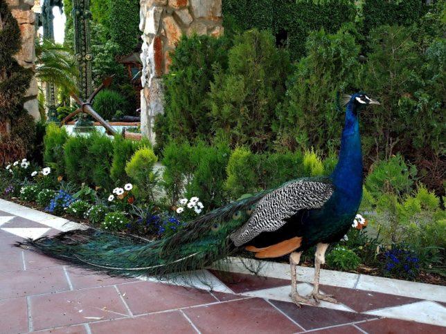 В двора на замъка можете да се натъкнете на красиви животински и растителни видове.