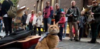 котка Боб