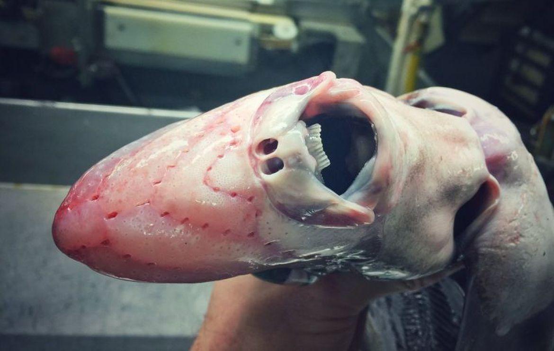 scaryfish1