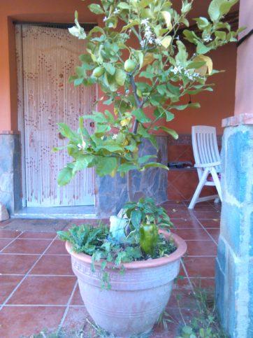 градинар, лимон, чушки