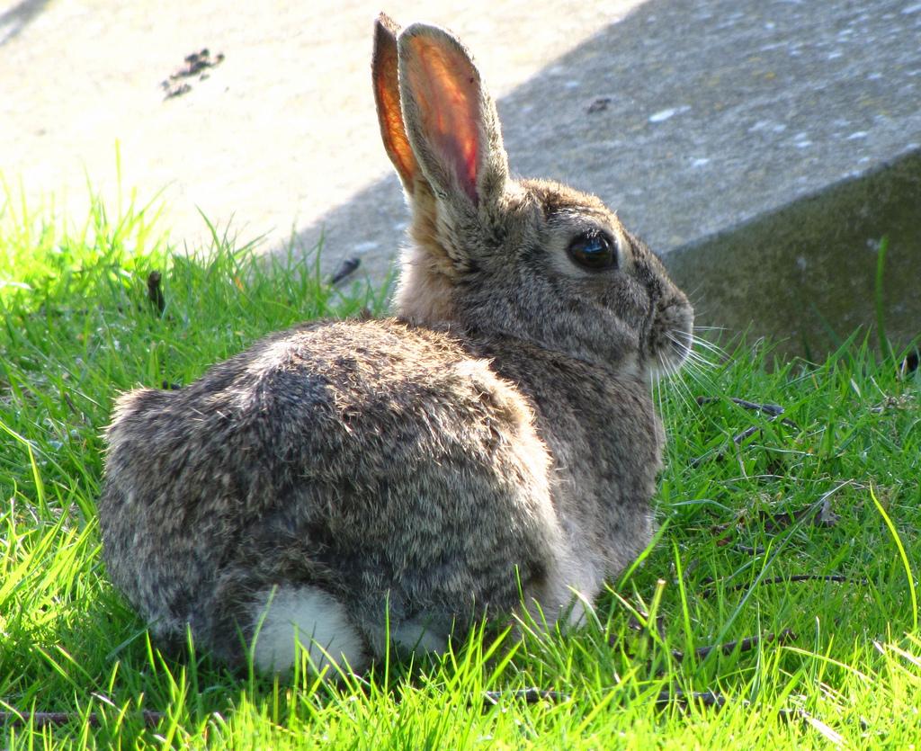 Баба Тацка не ни даваше да ги гушкаме зайчета и това си беше! Снимка: jans canon via Foter.com / CC BY