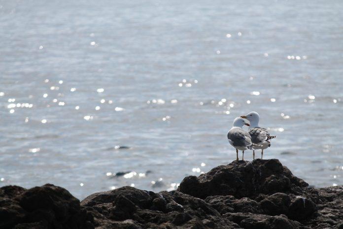 море чайки