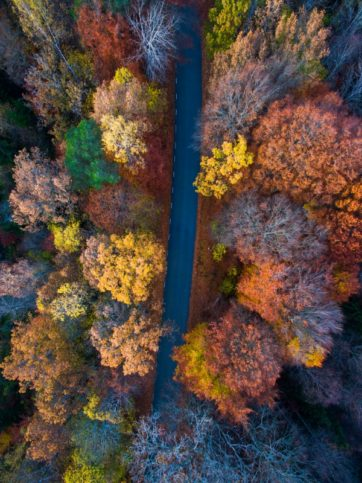 autumn-fall-forest