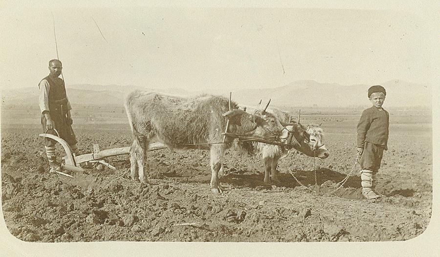 Волски впряг, началото на XX век.