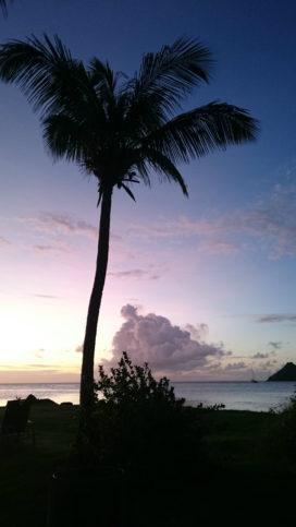 палма - море