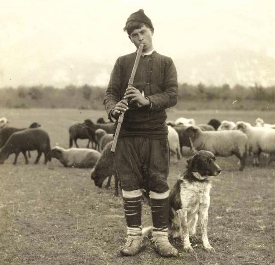 България преживява три войни, но през 1922 г. е на първо място по овцевъдство в Европа.