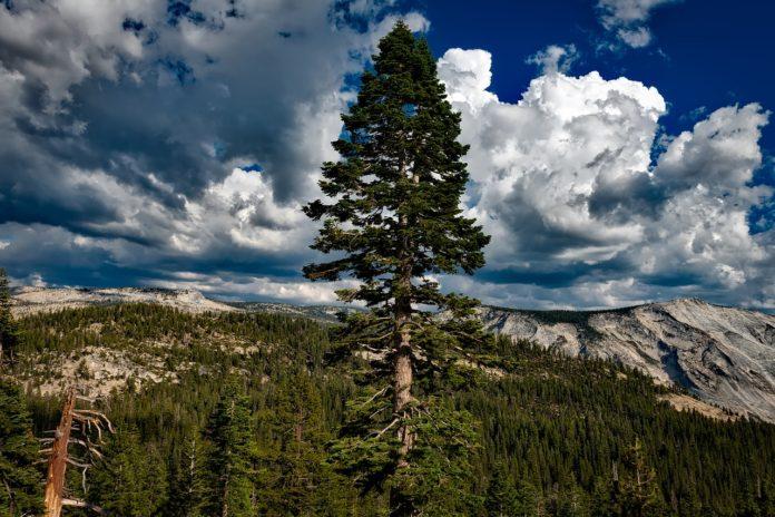 Притча за величественото дърво