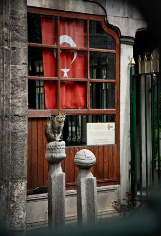 Истанбул - котки