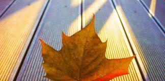 притча за волята и есенния лист