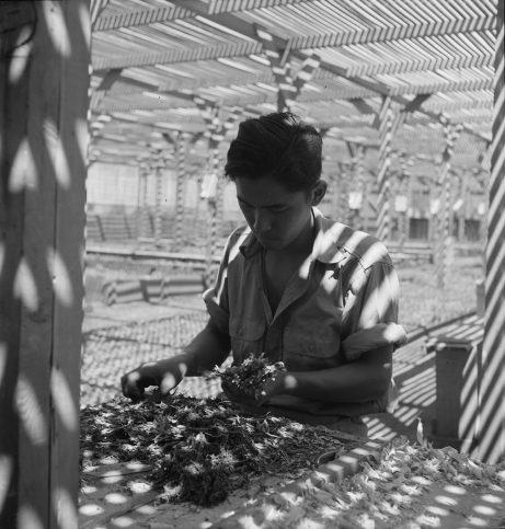 Калифорния, 1942 г.