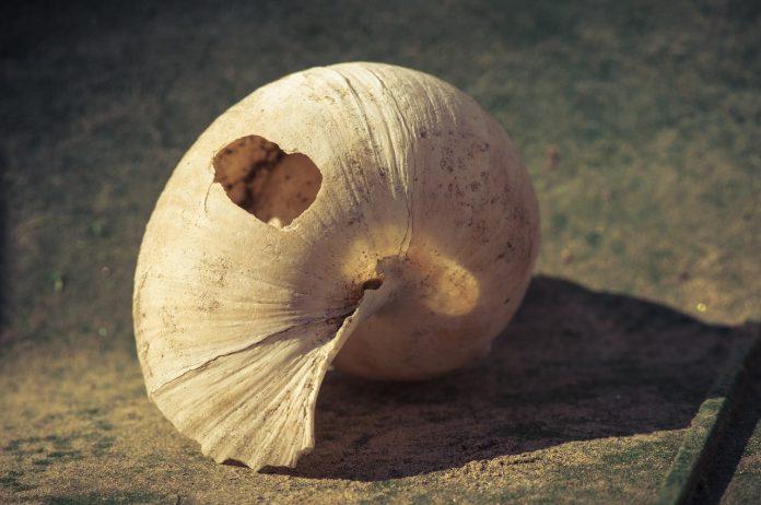 празна и спукана черупка от охлюв